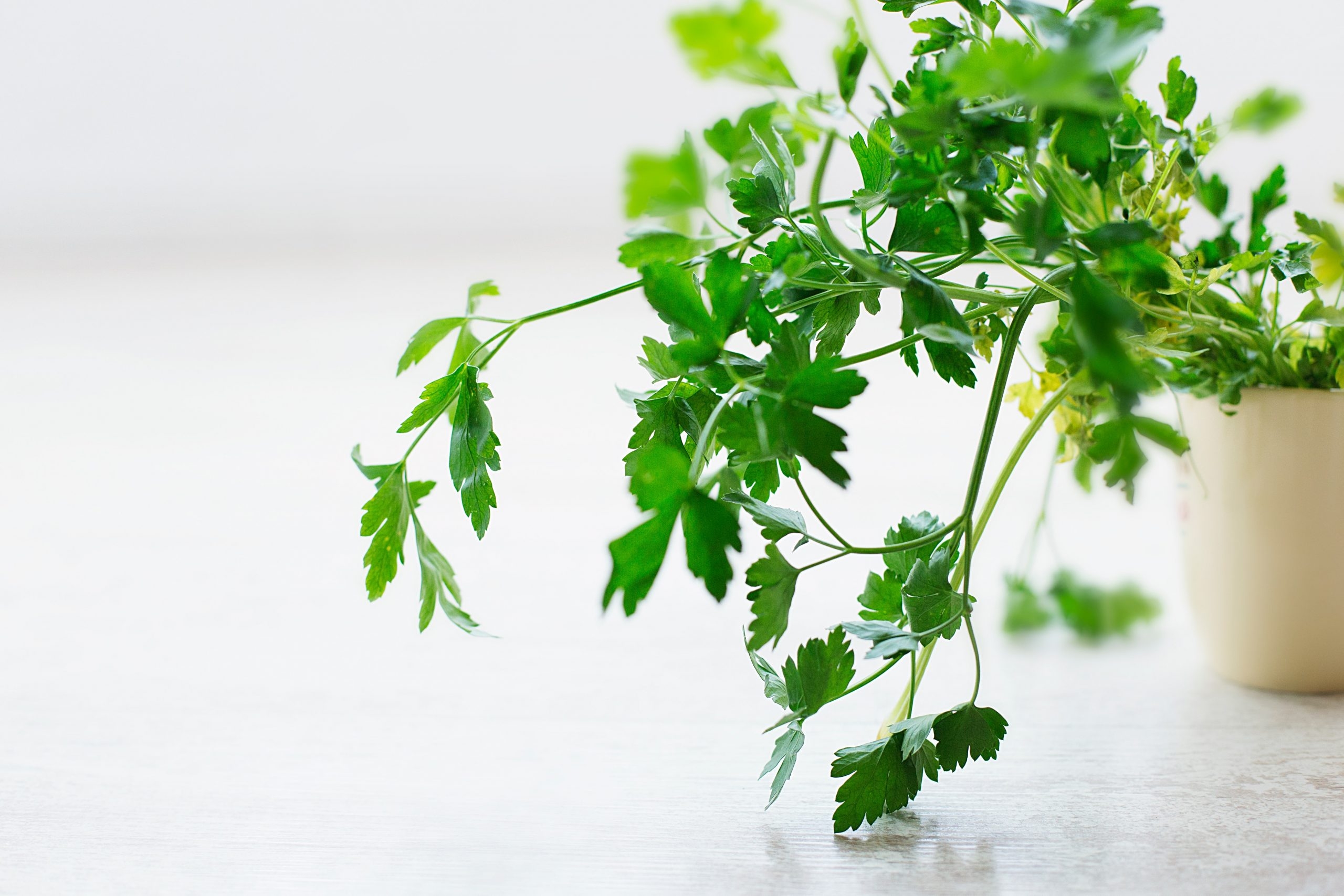 deodorize internally with plenty of foods high in chlorophyll, fiber and water